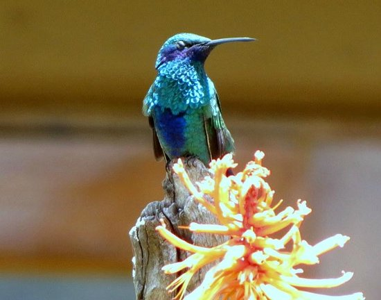 Casa Andina Premium Puno:                   This beautiful guy was just hanging out on the grounds