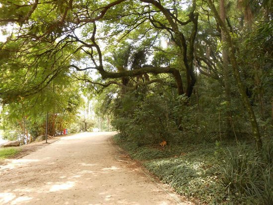 Campinas, SP :                   Taquaral 1