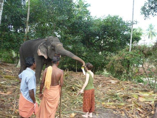 Marari Dreamz: elephant