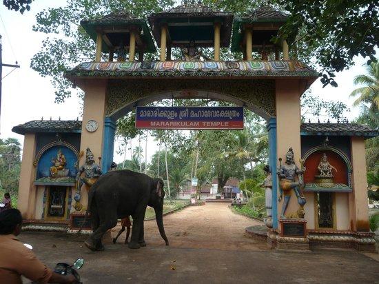 Marari Dreamz: temple