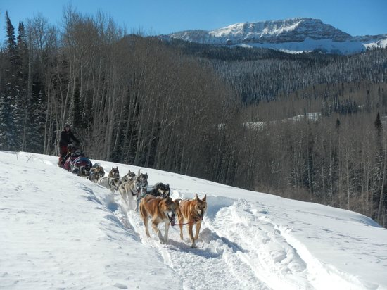 Snow Buddy Dog Sled Tours: An authentic dog sledding experience in Colorado.