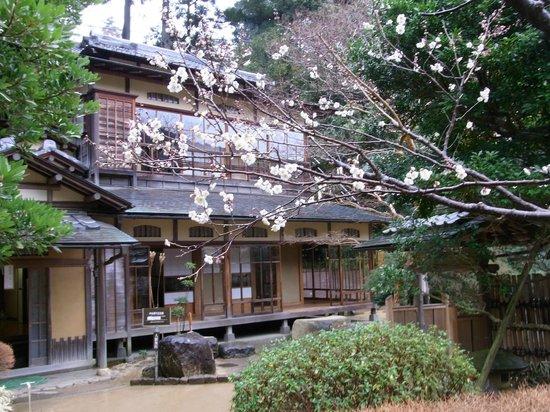 Atami Plum Garden:                   熱海梅園1