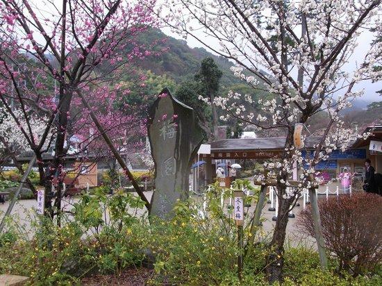 Atami Plum Garden:                   熱海梅園6