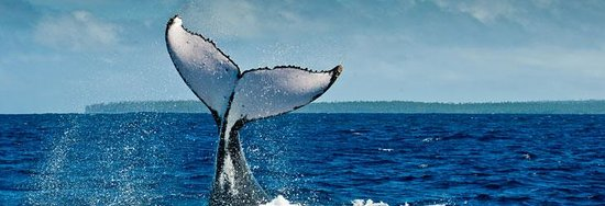 Beluga Diving Vava'u Photo
