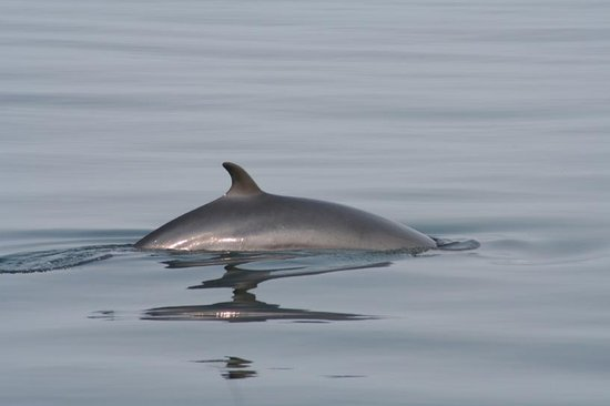 Sightseer Whale and Dolphin Cruises Bild