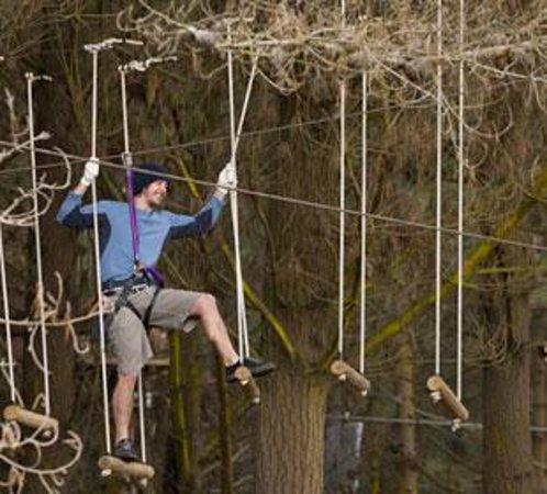 Adrenalin Forest Jpg
