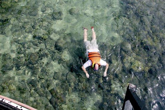Maxima Aquafun:                   snorkeling as its best