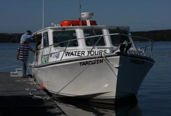 Tarquin Whale Watch Picture