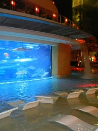 Pool Shark Tank Picture Of Golden Nugget Hotel Las Vegas Tripadvisor