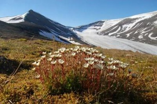 Svalbard Wildlife Expeditions: explore the artic fauna by hiking in adventures landscapes
