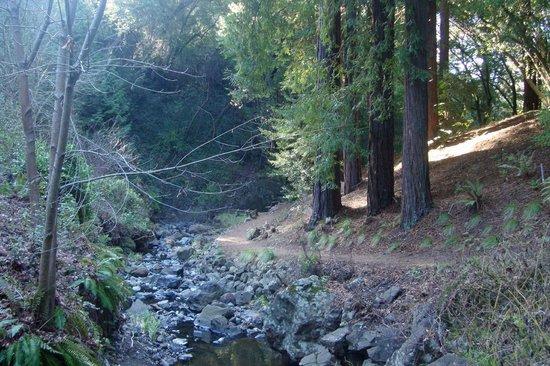 Regional Parks Botanic Garden:                   Path near the stream