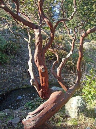 Regional Parks Botanic Garden照片