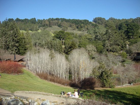 Regional Parks Botanic Garden:                   Beautiful Views of the Canyon