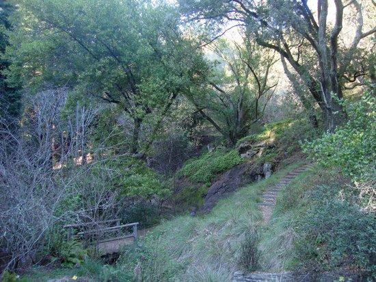 Regional Parks Botanic Garden:                   Botanical Garden View