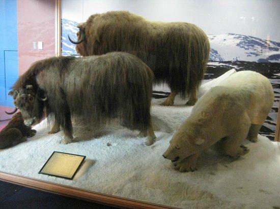 Auckland Müzesi:                   museum