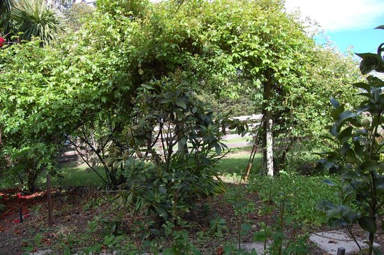 Trevallyn House B & B: Garden