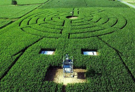 Corn Maze Eutingen
