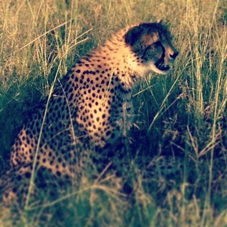 Rhulani Safari Lodge :                   Cheetah