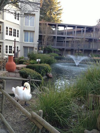 Embassy Suites by Hilton Napa Valley :                   Love the Landscape & views