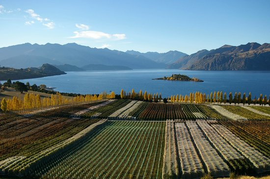 Wanaka Wine Tours : Rippon Vineyard