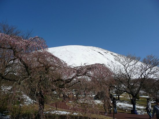 Sakura no Sato:                   桜にはチト早かった