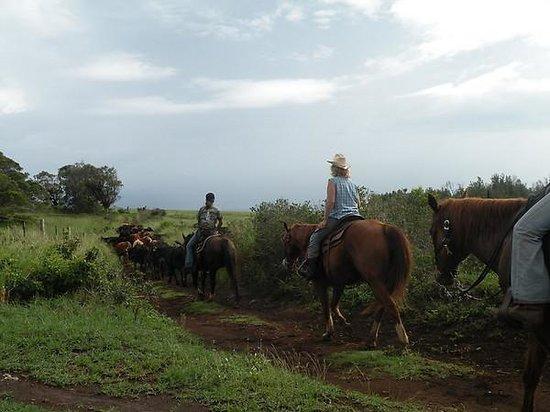 Zdjęcie Puu o Hoku Ranch