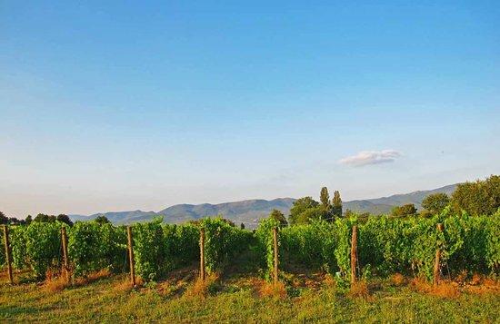 Raina Winery and Vineyard: La Vigna Nuova