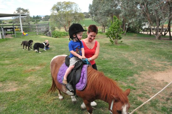 Barcoos Farmstays Bathurst:                   Having a ride on Cody