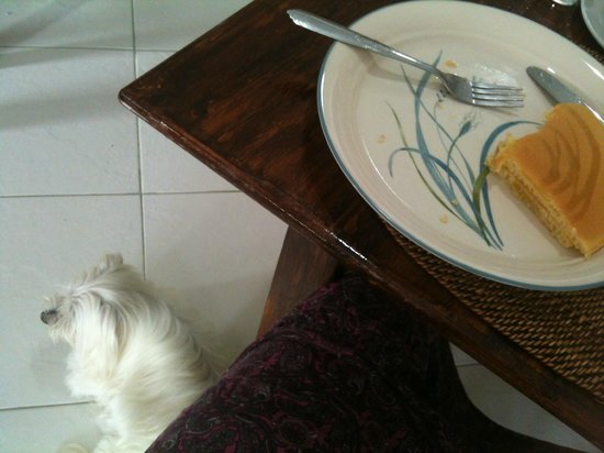 Turtle Inn Resort:                                     Pancake breakfast with Turtle Inn's family dog.