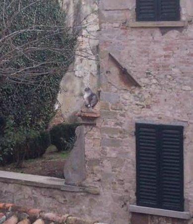 Residenza Antica Canonica:                   vista dalla camera da letto su giardino con gatto                 