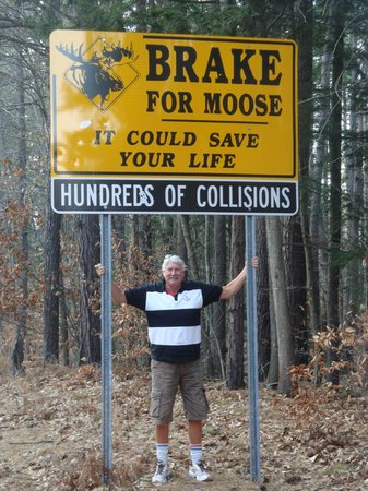 White Mountain National Forest:                                     Me and My Moose !