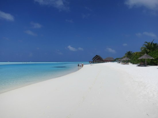 Anantara Dhigu Maldives Resort:                   beach