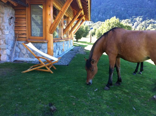 Estancia Peuma Hue:                   horses graze outside my room