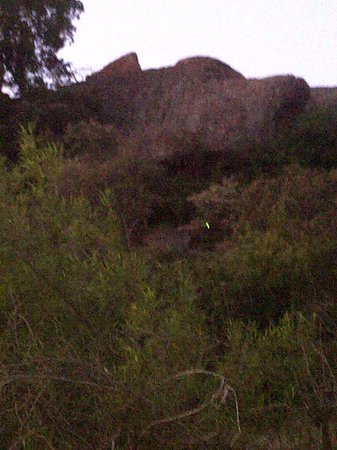 Bakubung Bush Lodge:                                     There is a leopard in this Photo I promise