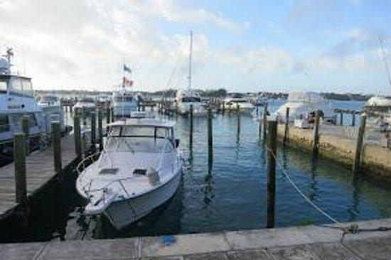 Paradise Harbour Club & Marina:                   Harbor view