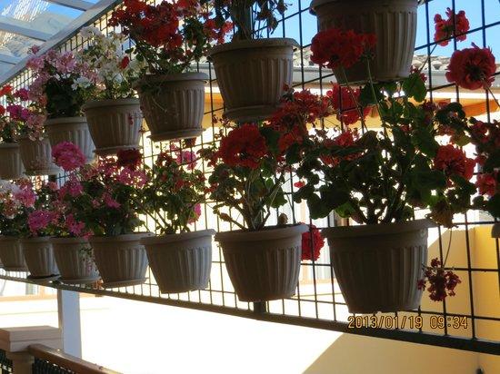 Hotel Boutique Plaza Sucre:                   desde la habitacion, patio interior con geranios