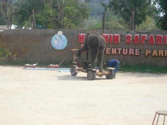 Hua Hin Safari:                   spectacle
