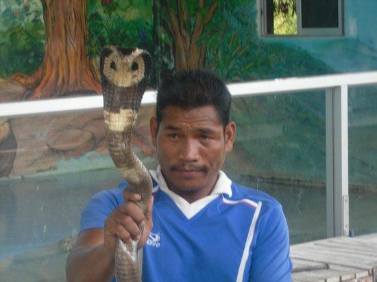 Hua Hin Safari:                   cobra