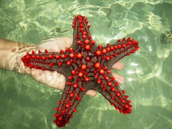 Kenga Giama Resort:                   le stelle marine all'atollo emerso con la bassa mare