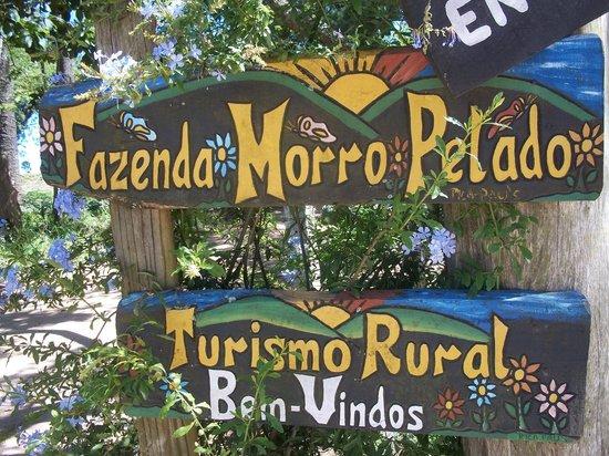 Aguas de Lindoia, SP:                   fazenda Morro Pelado