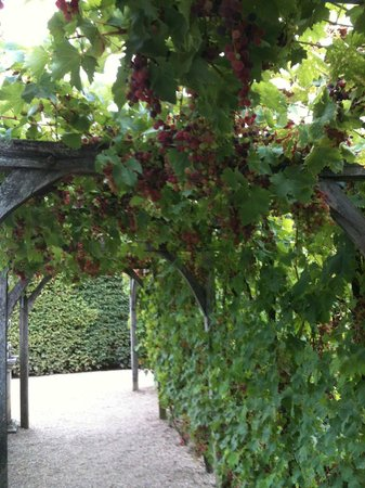 Chateau de Villandry:                   Grape Harvest?