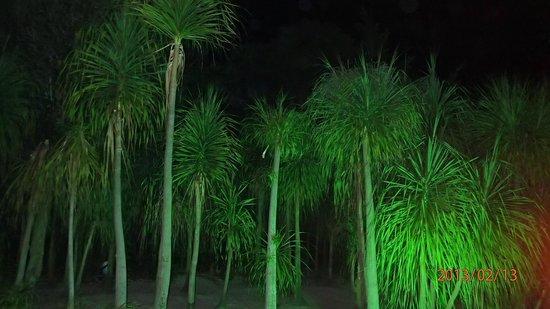 Grand Sirenis Riviera Maya Resort & Spa:                   Palm at night by the pool