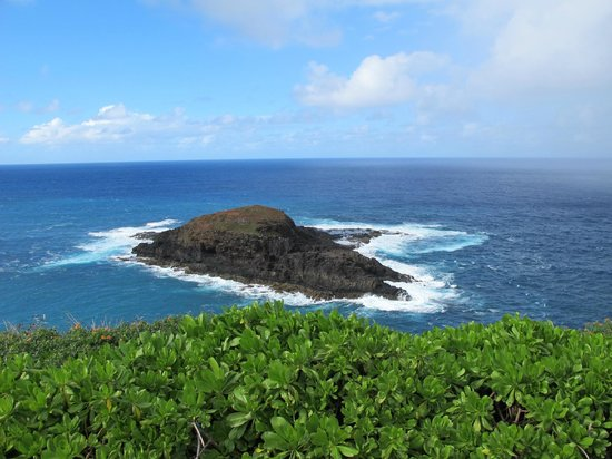 Kilauea Point National Wildlife Refuge:                   Rocky Vista