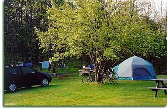Zdjęcie Pinederosa Camping Area