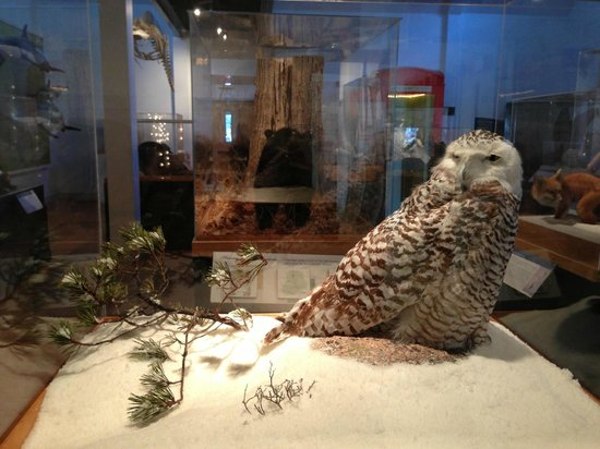 George B. Dorr Museum of Natural History: This snowy owl is just one of the many dioramas featuring Maine wildlife.