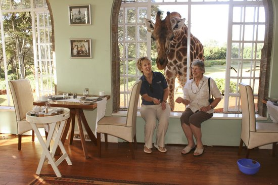 Giraffe Manor:                   Breakfast with giraffe