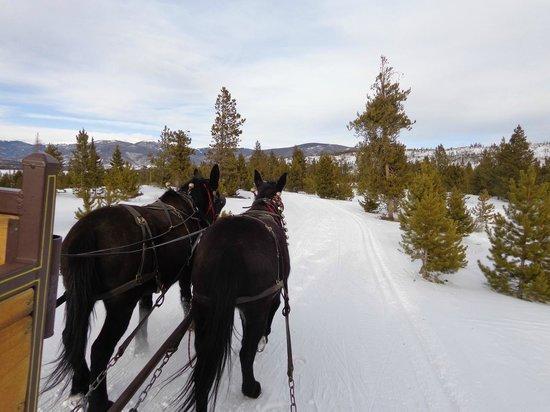 Two Below Zero Dinner Sleigh Rides : Sleigh ride pulling us