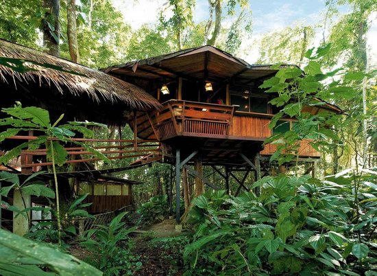 Tree House Lodge: sleeping up in the trees