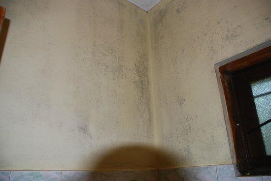 Palm Garden Guest House :                   Moisissures-salle de bain