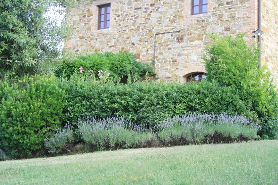 Rigone in Chianti: Saturnia